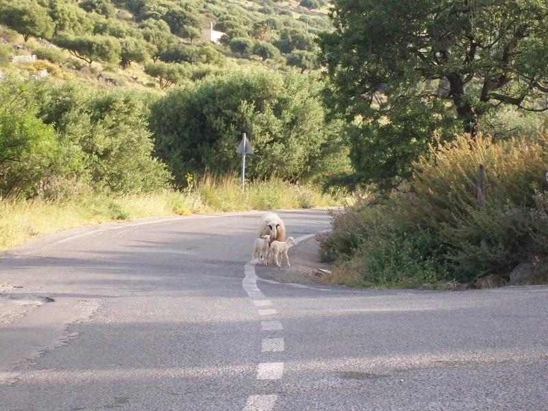 Kreta april 2012 132